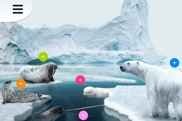 Discover the Arctic
